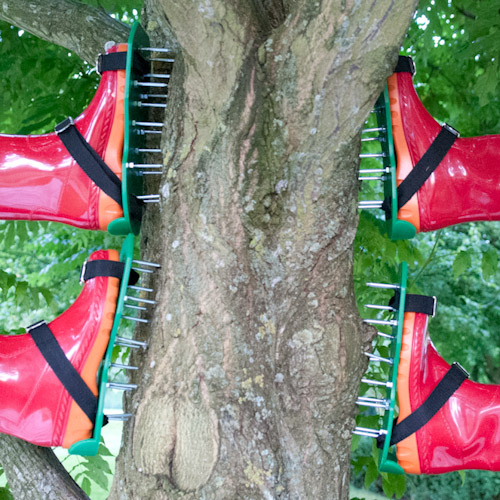 TBL Installation Up in the Trees